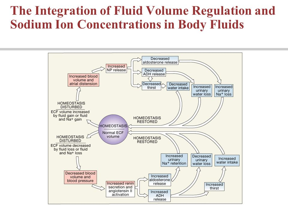 The Integration of Fluid Volume Regulation and Sodium Ion Concentrations in Body Fluids