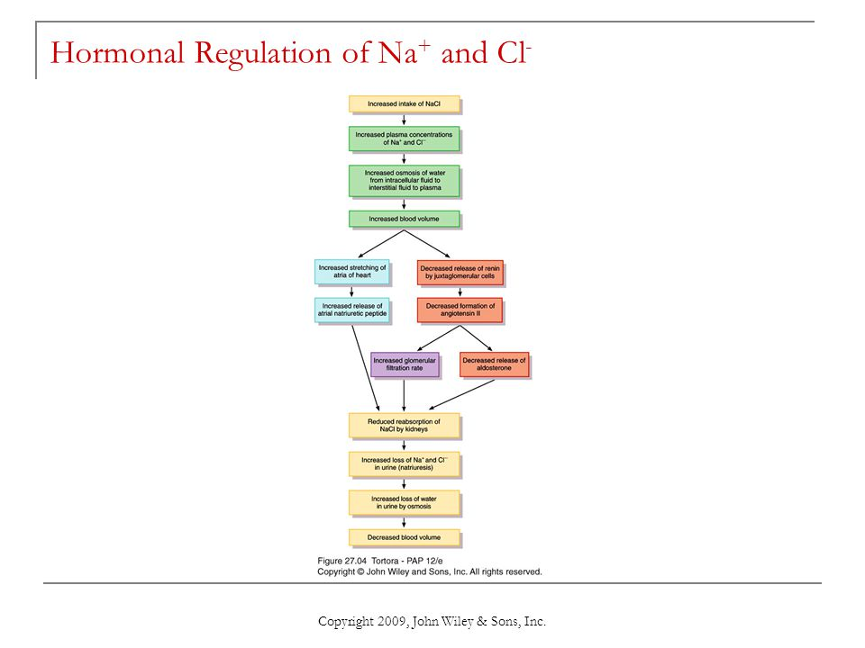 Copyright 2009, John Wiley & Sons, Inc. Hormonal Regulation of Na + and Cl -