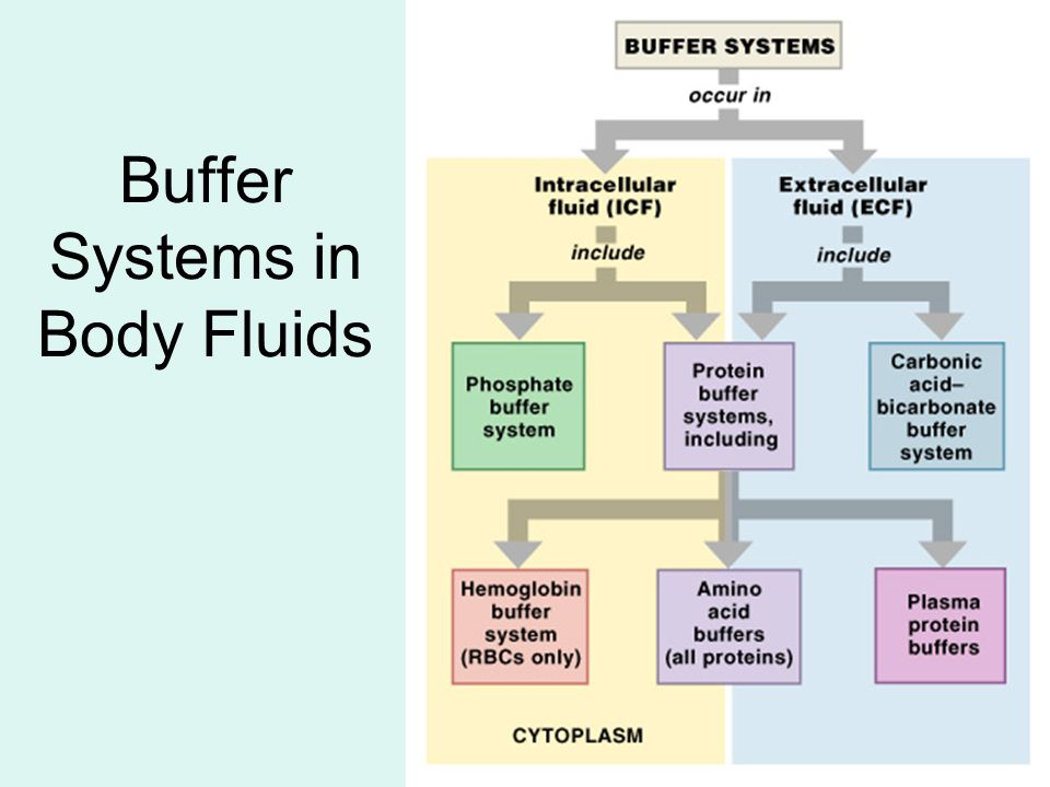 Buffer Systems in Body Fluids Figure 27–7