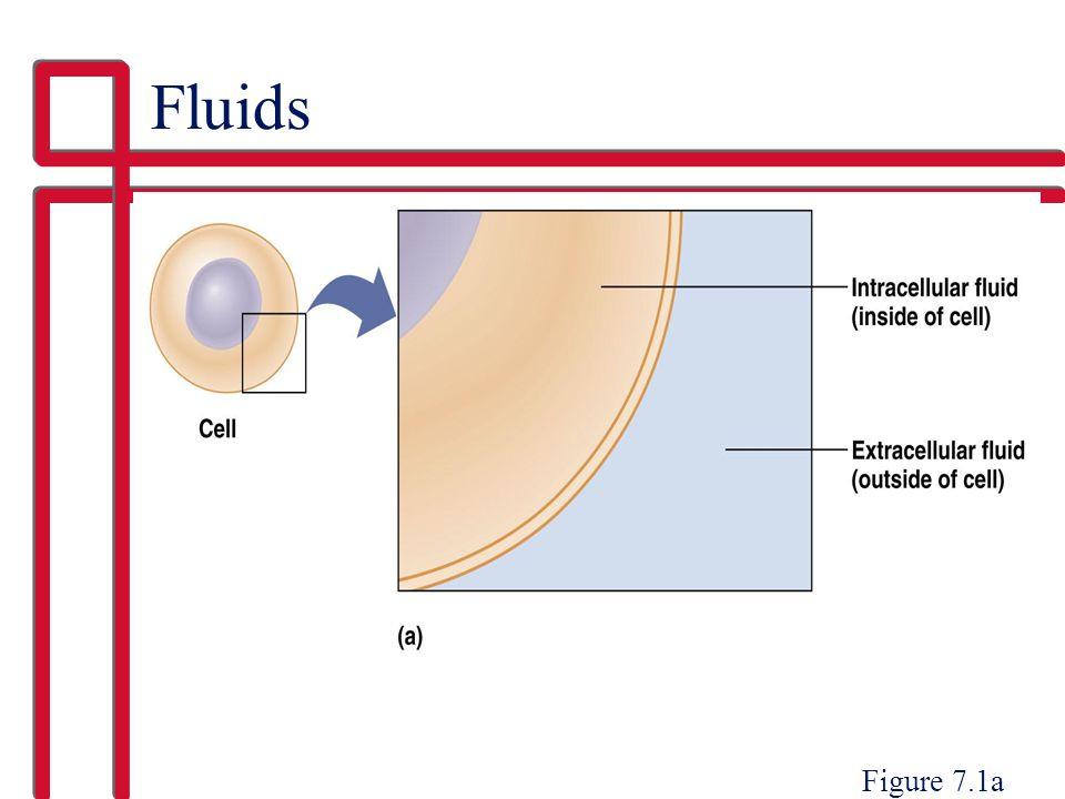 Fluids Figure 7.1a