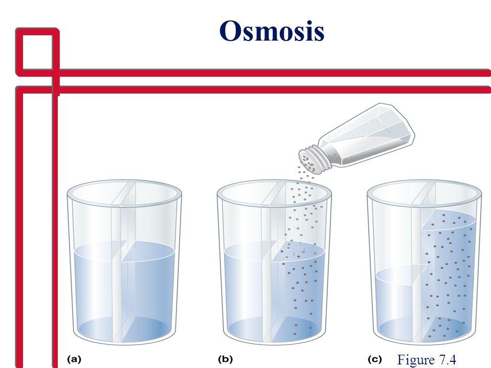 Osmosis Figure 7.4
