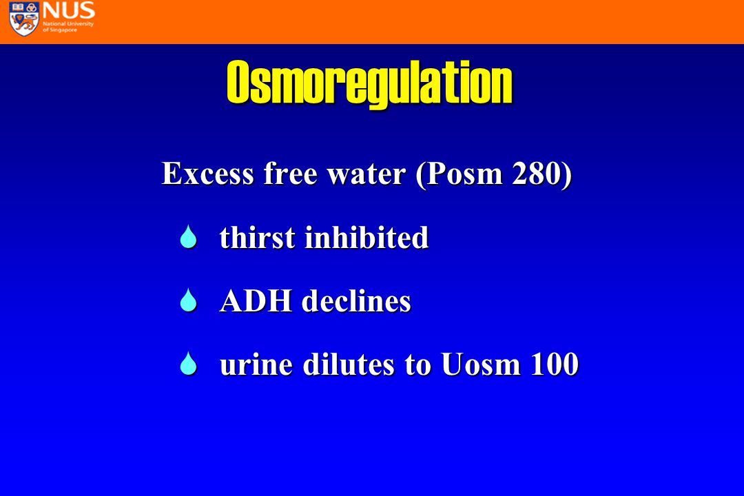Diagnosis of Hyponatremia l assess circulating volume l exclude hyperosmolar states l check for losses l check for excess free water replacement l In difficult situations measure urine Na (> <20mEq/L)