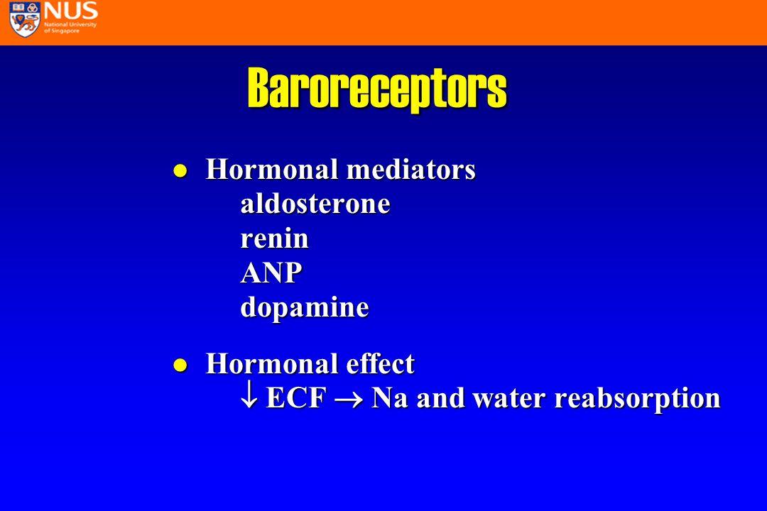 l Neural mechanism Autonomic nervous system Baroreceptors