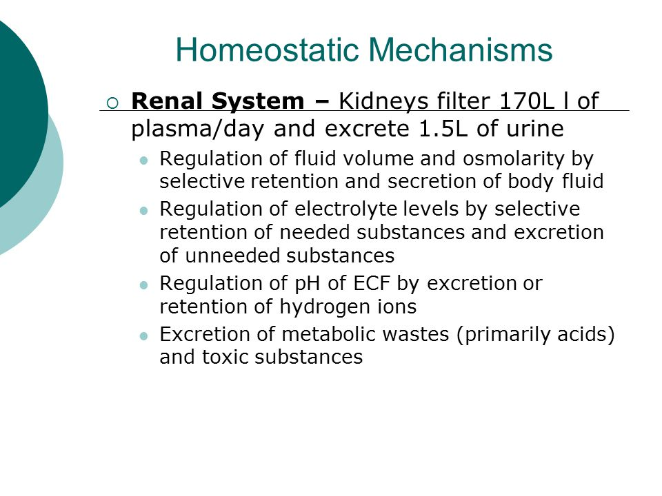 Homeostatic Mechanisms  Renal System – Kidneys filter 170L l of plasma/day and excrete 1.5L of urine Regulation of fluid volume and osmolarity by sel