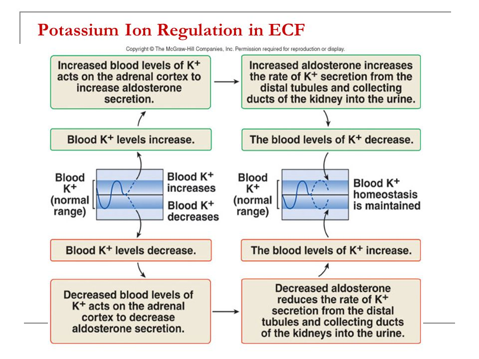 Potassium Ion Regulation in ECF