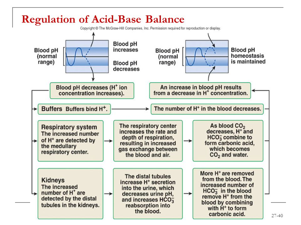 27-40 Regulation of Acid-Base Balance
