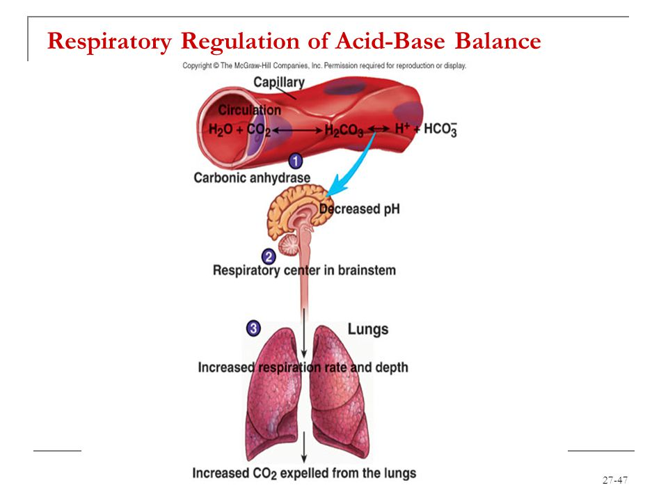 27-47 Respiratory Regulation of Acid-Base Balance