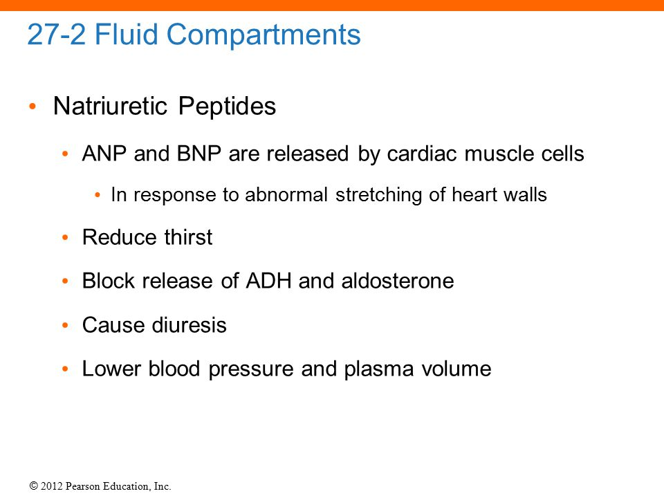 © 2012 Pearson Education, Inc. 27-2 Fluid Compartments Natriuretic Peptides ANP and BNP are released by cardiac muscle cells In response to abnormal s
