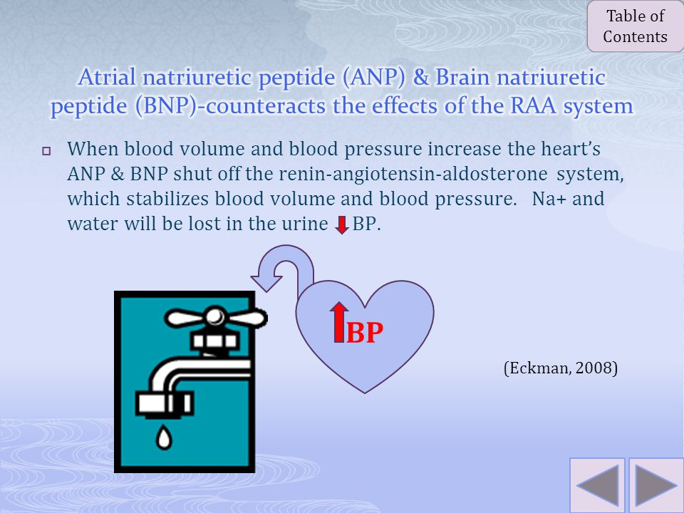 . Blood flow to the kidney decreases Kidney secretes renin into the bloodstream Renin converts angiotensinogen formed in the liver to antiotensin I Angiotensin II stimulates the adrenal glands to produce aldosterone Angiotensin 1 is converted to angiotensin II Aldosterone causes the kidneys to retain sodium and water Sodium and water retention leads to increases in fluid volume and sodium levels (Eckman, 2008) Table of Contents Table of Contents
