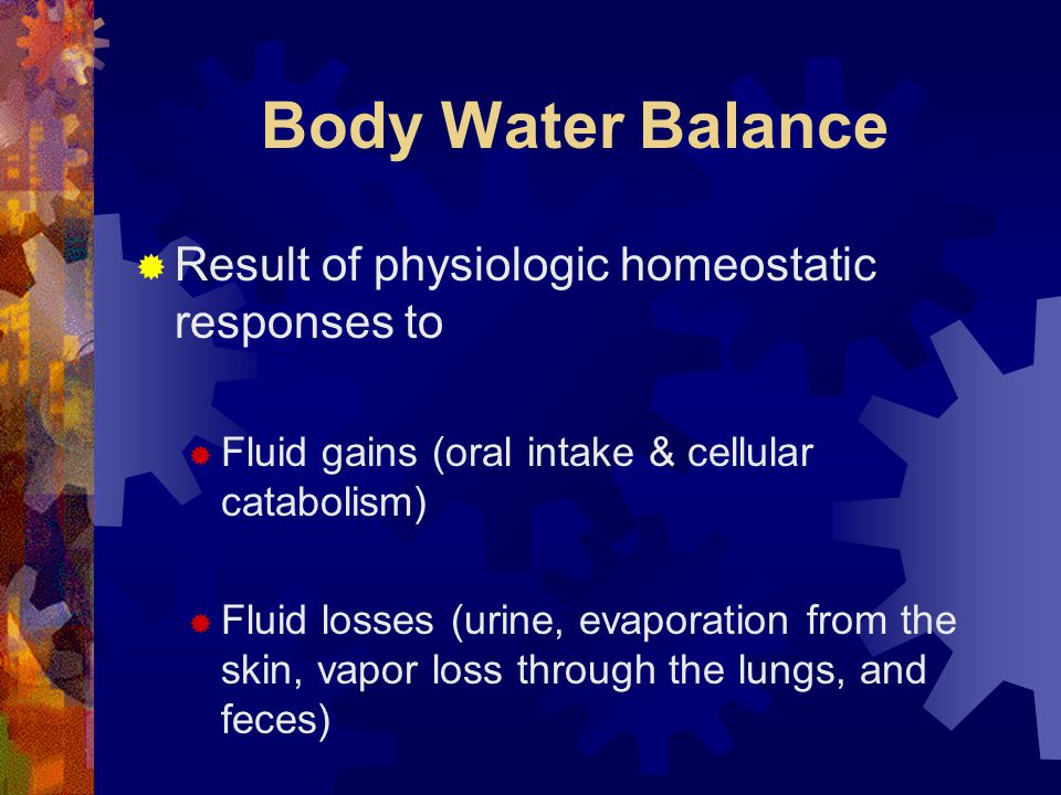Body Water Balance  Result of physiologic homeostatic responses to  Fluid gains (oral intake & cellular catabolism)  Fluid losses (urine, evaporation from the skin, vapor loss through the lungs, and feces)