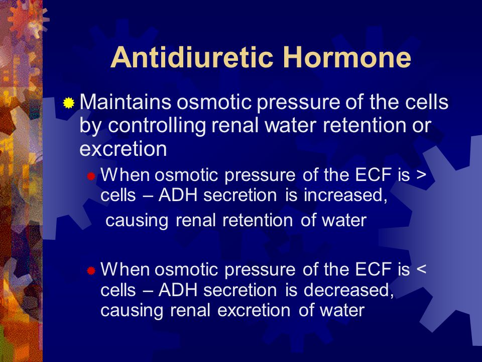 Antidiuretic Hormone  Maintains osmotic pressure of the cells by controlling renal water retention or excretion  When osmotic pressure of the ECF is > cells – ADH secretion is increased, causing renal retention of water  When osmotic pressure of the ECF is < cells – ADH secretion is decreased, causing renal excretion of water