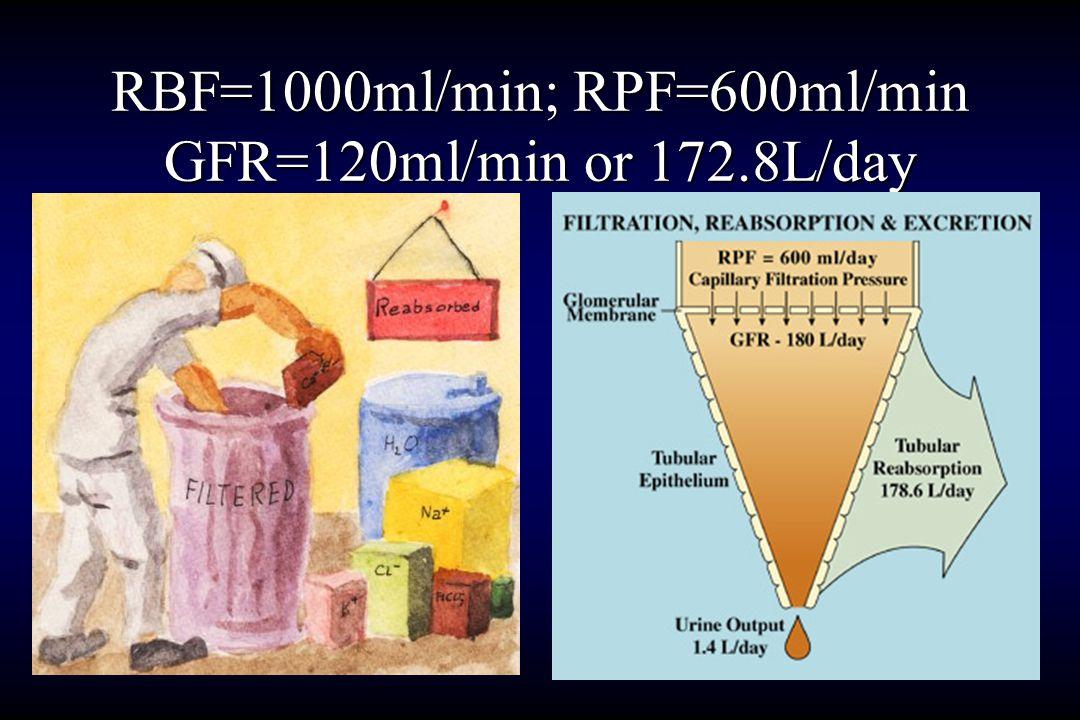 RBF=1000ml/min; RPF=600ml/min GFR=120ml/min or 172.8L/day
