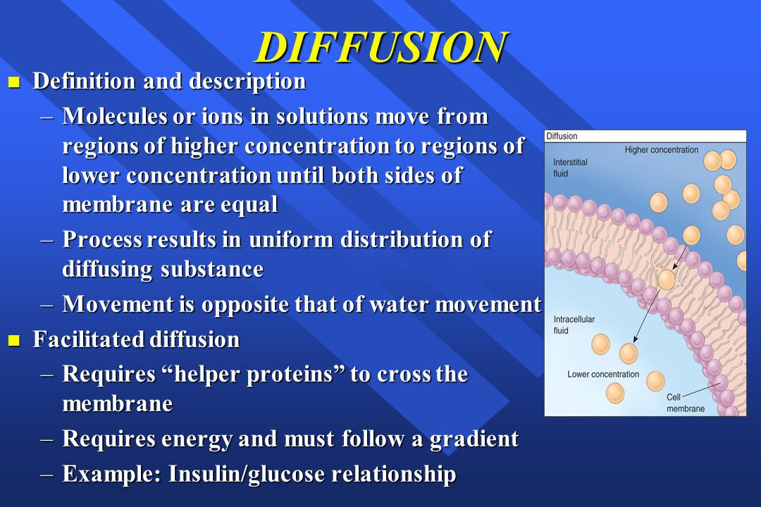DIFFUSION n Definition and description –Molecules or ions in solutions move from regions of higher concentration to regions of lower concentration until both sides of membrane are equal –Process results in uniform distribution of diffusing substance –Movement is opposite that of water movement n Facilitated diffusion –Requires helper proteins to cross the membrane –Requires energy and must follow a gradient –Example: Insulin/glucose relationship