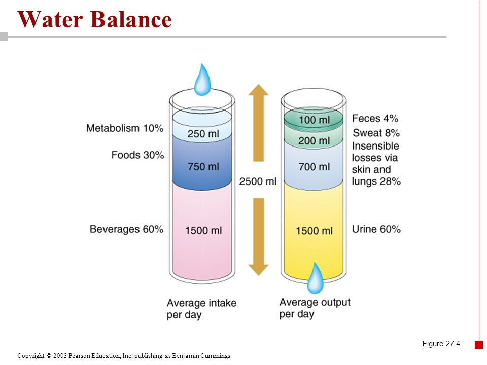 Copyright © 2003 Pearson Education, Inc. publishing as Benjamin Cummings Water Balance Figure 27.4