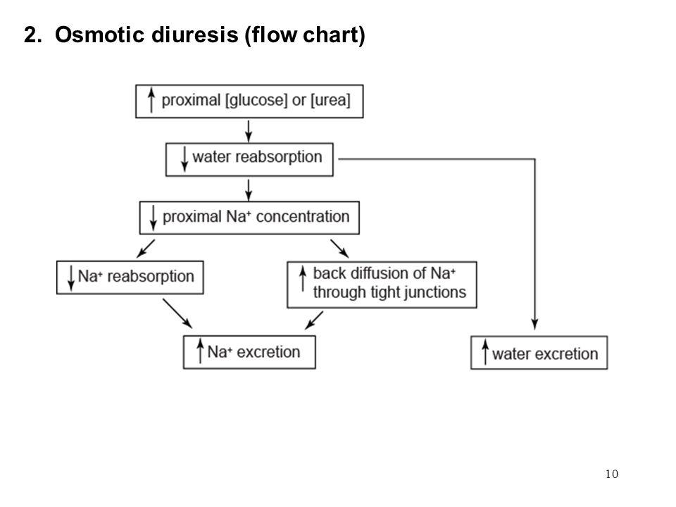 10 2. Osmotic diuresis (flow chart)