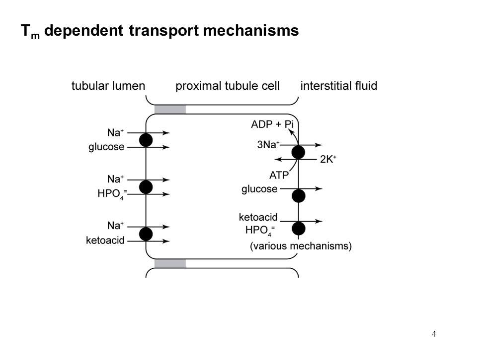 4 T m dependent transport mechanisms
