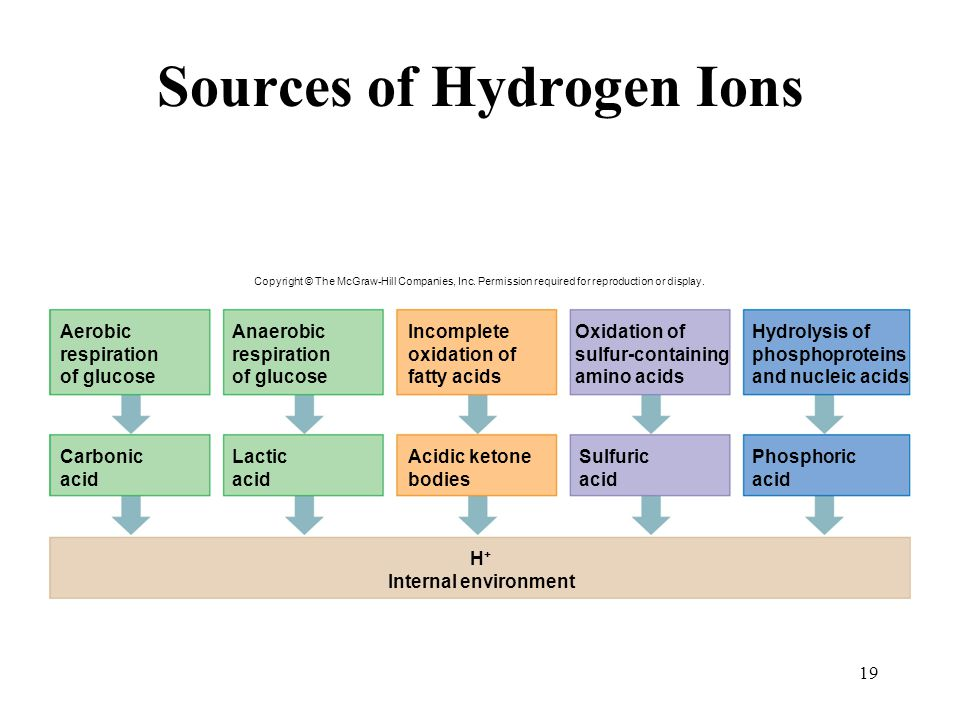 19 Sources of Hydrogen Ions Aerobic respiration of glucose Anaerobic respiration of glucose Incomplete oxidation of fatty acids Oxidation of sulfur-co