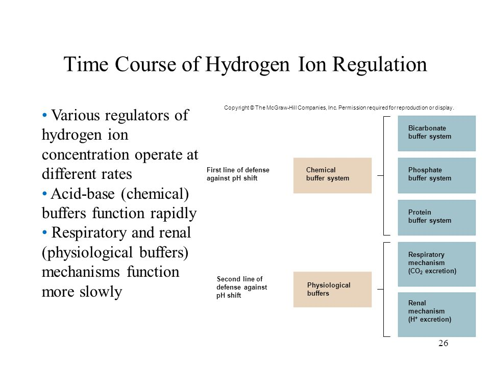 26 Time Course of Hydrogen Ion Regulation Various regulators of hydrogen ion concentration operate at different rates Acid-base (chemical) buffers fun