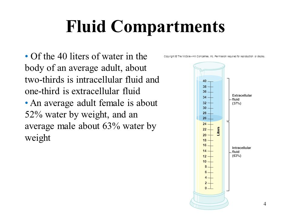 4 Fluid Compartments Of the 40 liters of water in the body of an average adult, about two-thirds is intracellular fluid and one-third is extracellular