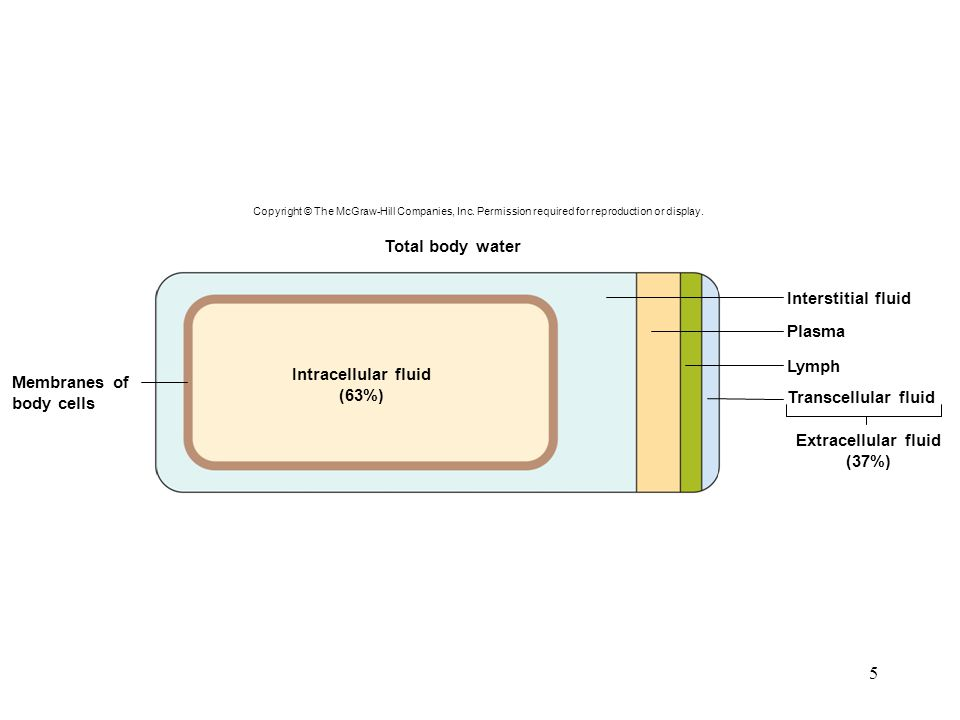 5 Total body water Interstitial fluid Plasma Lymph Transcellular fluid Extracellular fluid (37%) Membranes of body cells Intracellular fluid (63%) Cop