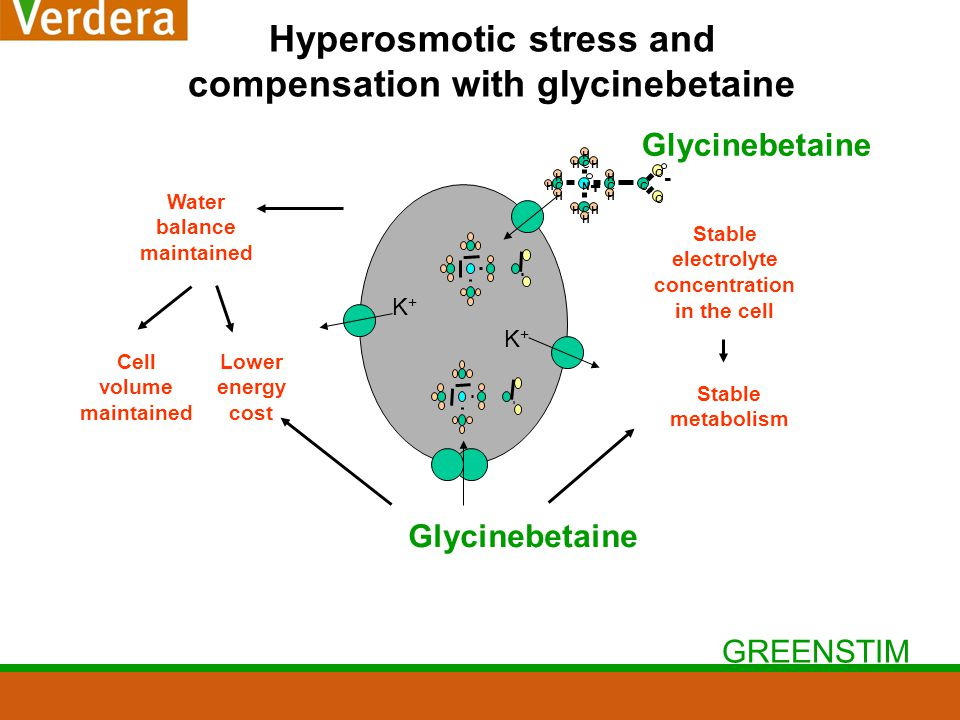 GREENSTIM Hyperosmotic stress and compensation with glycinebetaine K+K+ Water balance maintained Cell volume maintained Lower energy cost Stable metabolism Stable electrolyte concentration in the cell Glycinebetaine K+K+ NCC C C C O O H H H H H H H H HH H + -