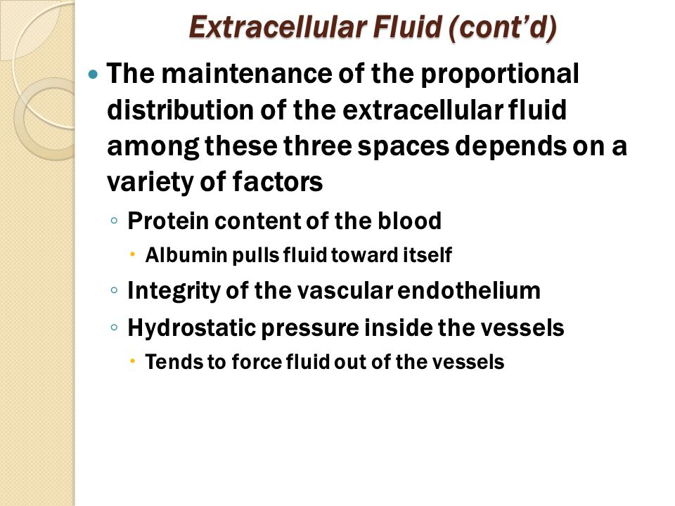 Extracellular Fluid (cont'd) The maintenance of the proportional distribution of the extracellular fluid among these three spaces depends on a variety of factors ◦ Protein content of the blood  Albumin pulls fluid toward itself ◦ Integrity of the vascular endothelium ◦ Hydrostatic pressure inside the vessels  Tends to force fluid out of the vessels