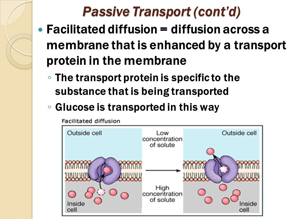 Passive Transport (cont'd) Facilitated diffusion = diffusion across a membrane that is enhanced by a transport protein in the membrane ◦ The transport protein is specific to the substance that is being transported ◦ Glucose is transported in this way