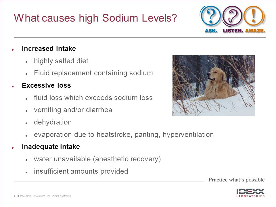 4 © 2004 IDEXX Laboratories, Inc., IDEXX Confidential What causes high Sodium Levels? Increased intake highly salted diet Fluid replacement containing