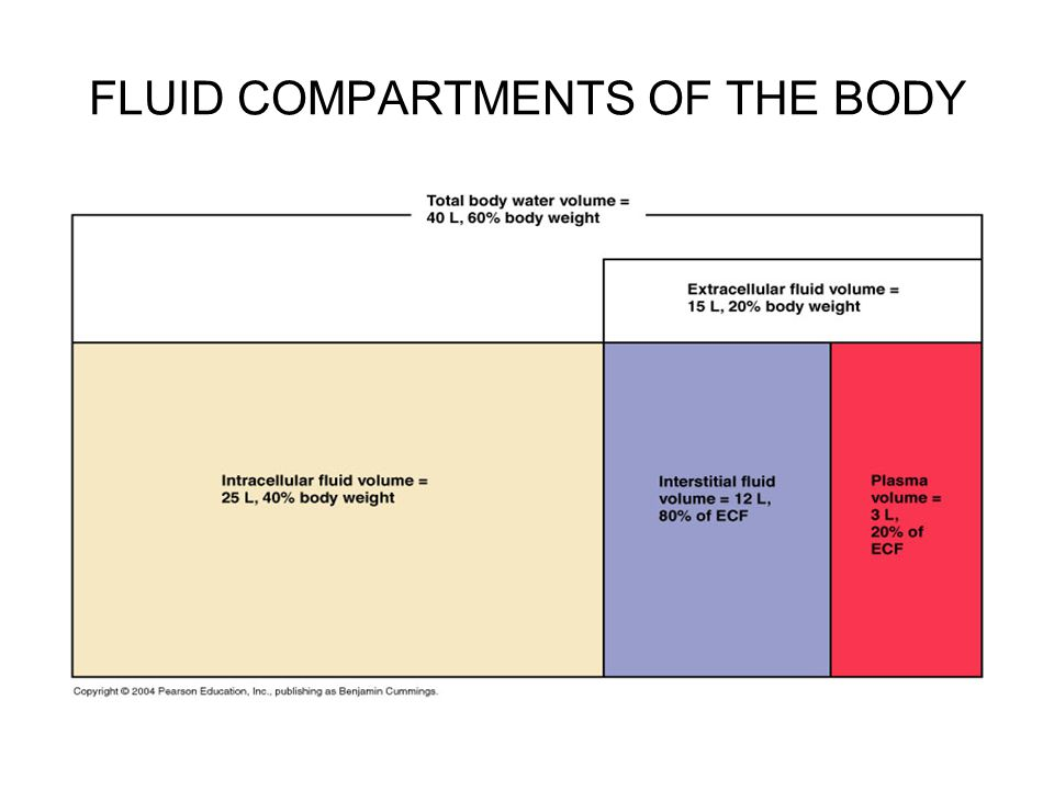 Composition of Body Fluids Electrolytes and Nonelectrolytes Water serves as the universal solvent in which a variety of solutes are dissolved: –Solutes may be classified broadly as: Electrolytes: dissociate in water to ions –Include inorganic salts, both inorganic and organic acids and bases, and some proteins –Conduct electric current Nonelectrolytes: do not dissociate in water –Have bonds (usually covalent) that prevent them from dissociating in solution –Include most organic molecules –Carry no net electrical charge when dissolved in water Although all dissolve solutes contribute to the osmotic activity of a fluid: –Electrolytes have greater osmotic power because they dissociate in water and contribute at least two particles to solution Examples: –NaCl → Na + + Cl - (electrolyte: two particles) –MgCl 2 → Mg 2+ + 2Cl - (electrolyte: three particles) –Glucose → Glucose (nonelectrolyte: one particle)