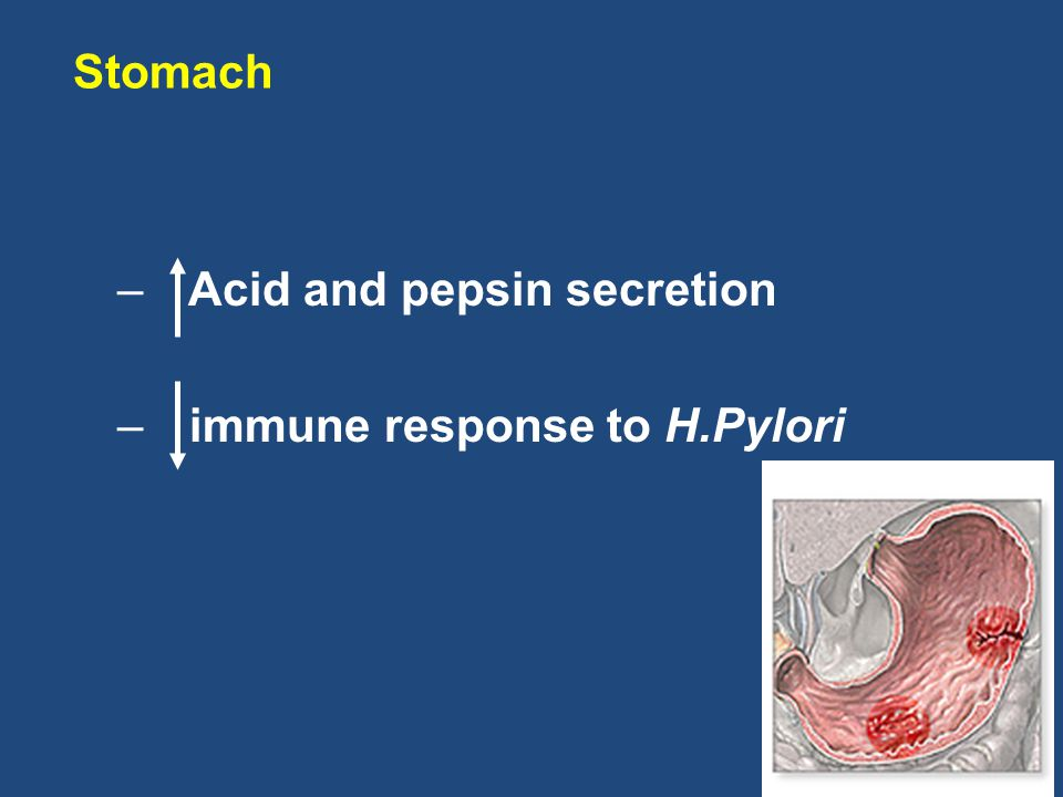 – Acid and pepsin secretion – immune response to H.Pylori Stomach