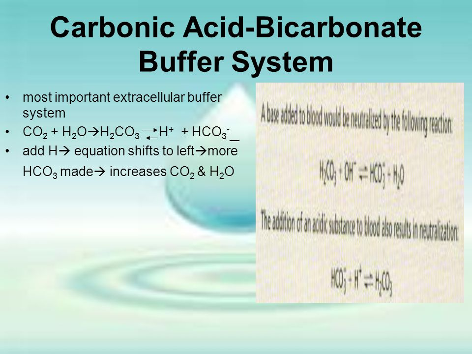 Carbonic Acid-Bicarbonate Buffer System most important extracellular buffer system CO 2 + H 2 O  H 2 CO 3 H + + HCO 3 - __ add H  equation shifts to
