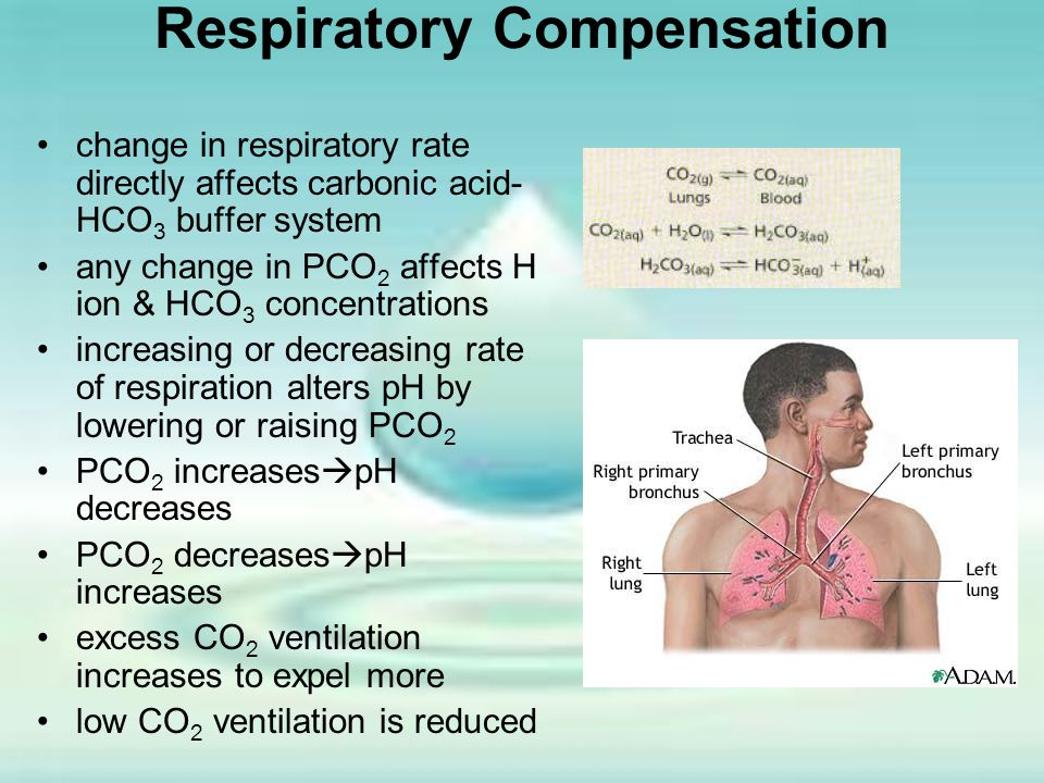 Respiratory Compensation change in respiratory rate directly affects carbonic acid- HCO 3 buffer system any change in PCO 2 affects H ion & HCO 3 conc