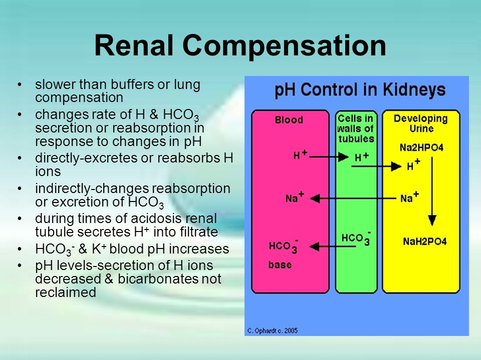 Renal Compensation slower than buffers or lung compensation changes rate of H & HCO 3 secretion or reabsorption in response to changes in pH directly-