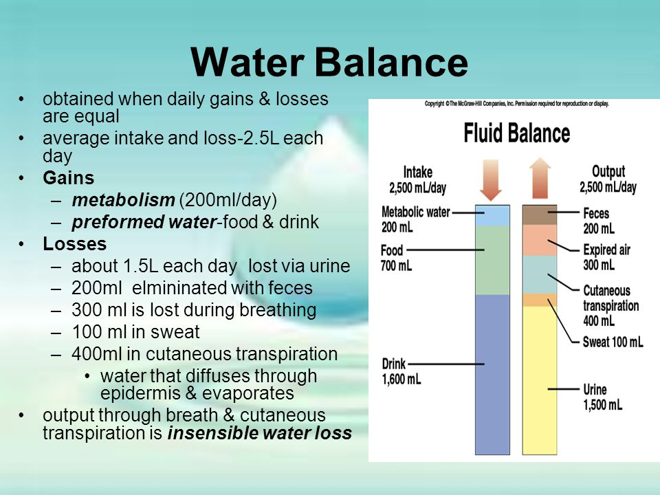 Water Balance obtained when daily gains & losses are equal average intake and loss-2.5L each day Gains –metabolism (200ml/day) –preformed water-food &