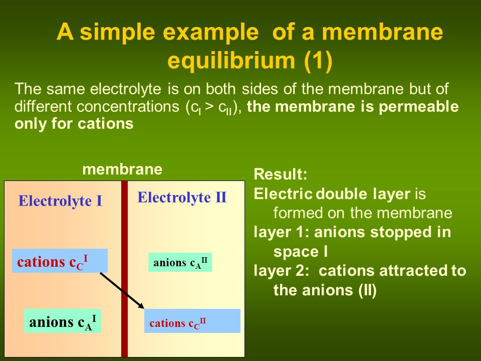 membrane Electrolyte I anions c A II cations c C I A simple example of a membrane equilibrium (2) Electrolyte II cations c C II anions c A I The concentration difference drives the cations, electric field of the bilayer pushes them back In equilibrium: potential difference U arises: II  II ------------------ ++++++++++++++++++ (Nernst equation)