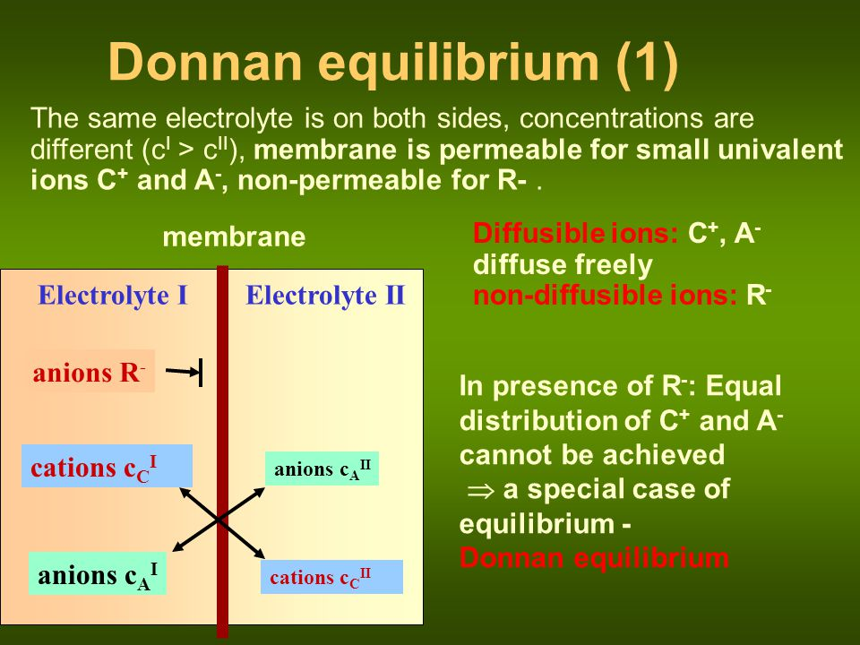 membrane Electrolyte I anions R - anions c A II cations c C I Electrolyte II cations c C II anions c A I Donnan equilibrium (2) Equilibrium concentrations: Donnan ratio: