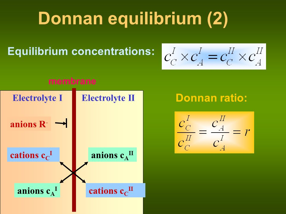 membrane Electrolyte I anions R - anions c A II cations c C I Electrolyte II cations c C II anions c A I Donnan equilibrium (3) ---------------------- ++++++++++++++++++++++ Donnan ratio: Donnan potential: