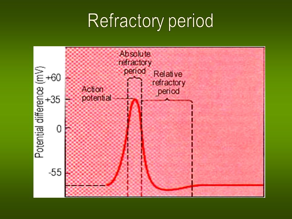 Action potential Changes in the distribution of ions caused by action potential are balanced with activity of ion pumps (active transport).