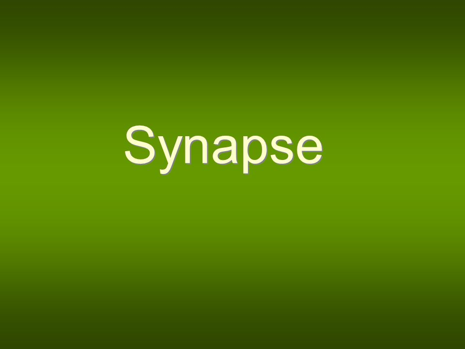 Definition Synapse is a specific connection between two neurons or between neurons an other target cells (e.g.