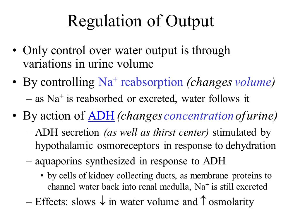 Regulation of Output Only control over water output is through variations in urine volume By controlling Na + reabsorption (changes volume) –as Na + i