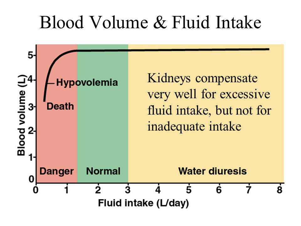Blood Volume & Fluid Intake Kidneys compensate very well for excessive fluid intake, but not for inadequate intake