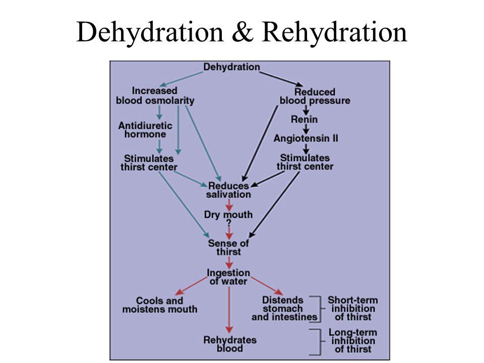 Dehydration & Rehydration