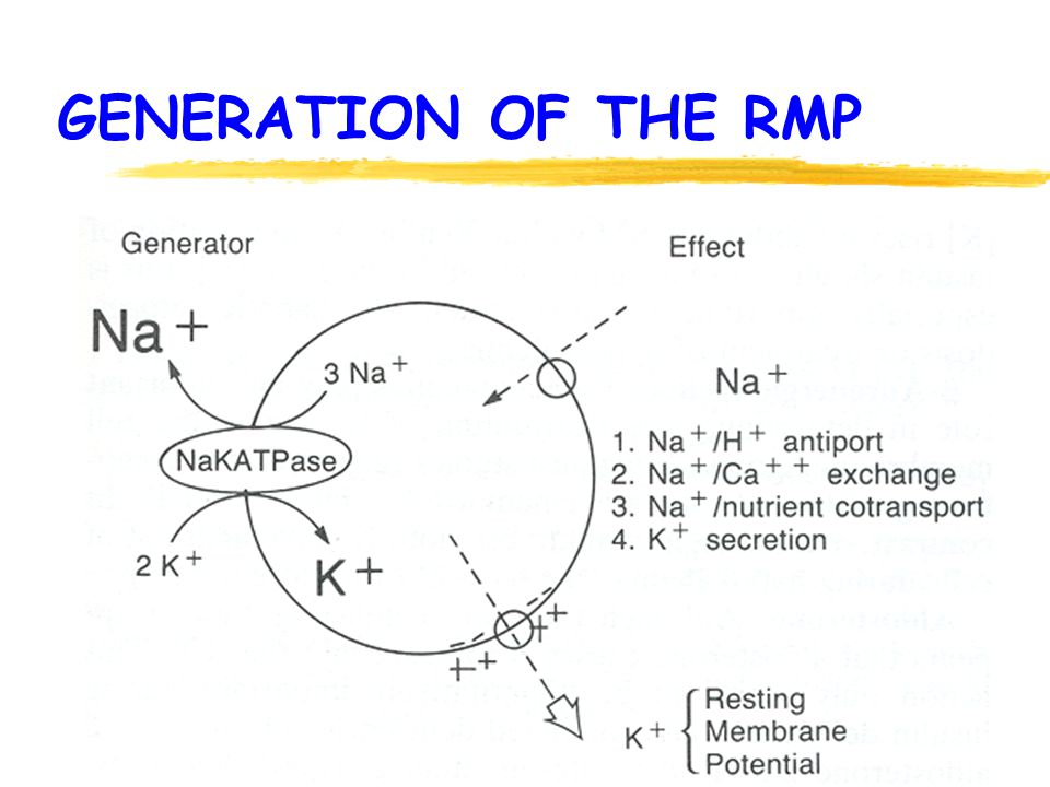 GENERATION OF THE RMP