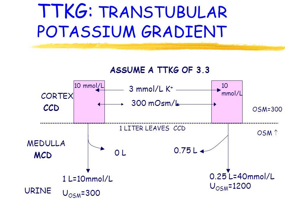 TTKG: TRANSTUBULAR POTASSIUM GRADIENT CORTEX MEDULLA URINE 3 mmol/L K + 300 mOsm/L CCD MCD ASSUME A TTKG OF 3.3 10 mmol/L 1 LITER LEAVES CCD 0 L 0.75 L 1 L=10mmol/L U OSM =300 0.25 L=40mmol/L U OSM =1200 OSM=300 OSM 