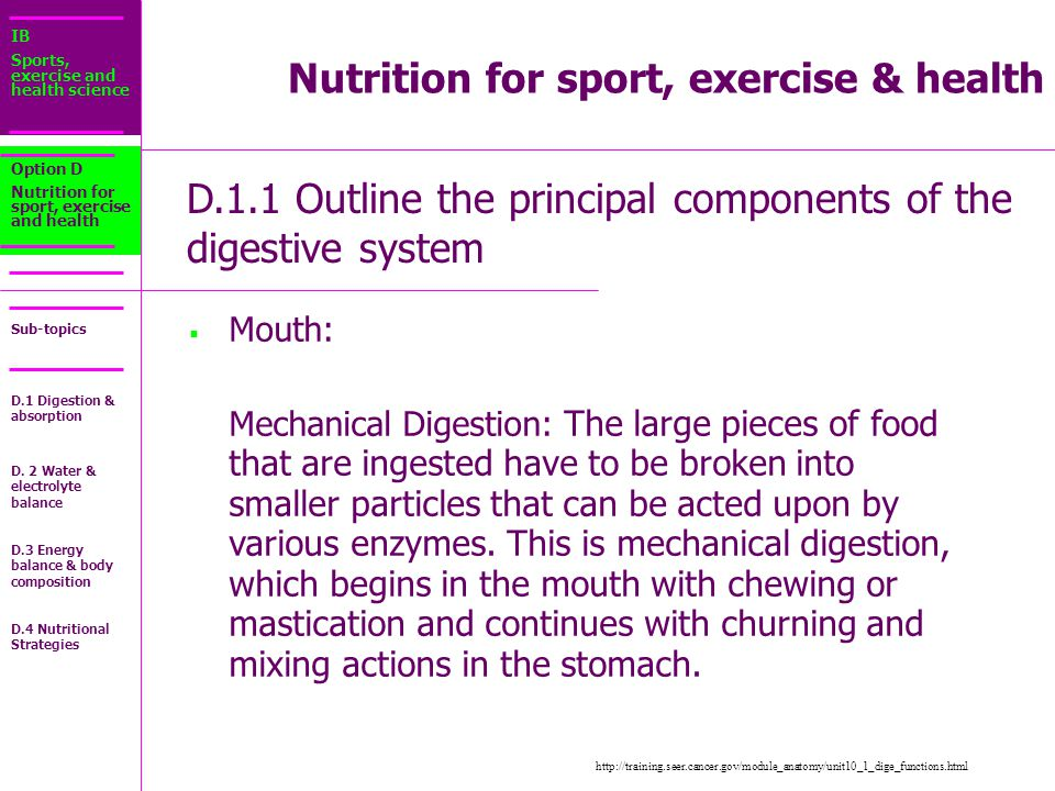 IB Sports, exercise and health science Sub-topics Nutrition for sport, exercise & health D.1.1 Outline the principal components of the digestive system Option D Nutrition for sport, exercise and health  Mouth: Mouth: Mechanical Digestion: The large pieces of food that are ingested have to be broken into smaller particles that can be acted upon by various enzymes.