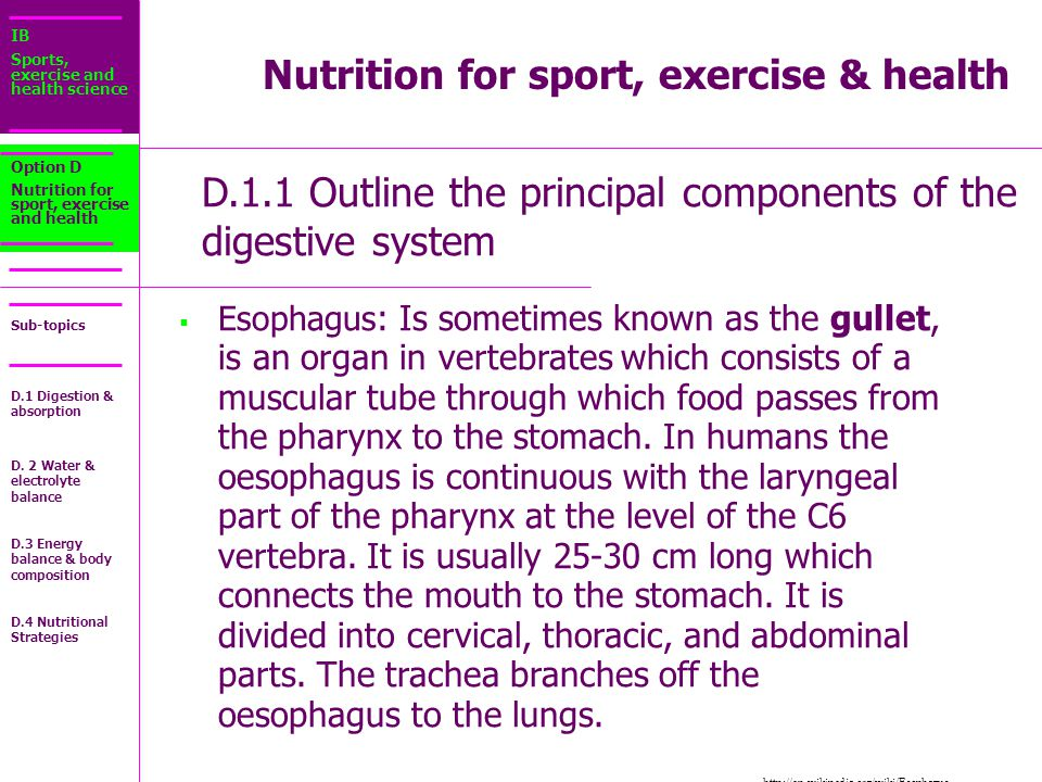 IB Sports, exercise and health science Sub-topics D.1.1 Outline the principal components of the digestive system Option D Nutrition for sport, exercise and health  Esophagus : Is sometimes known as the gullet, is an organ in vertebrates which consists of a muscular tube through which food passes from the pharynx to the stomach.
