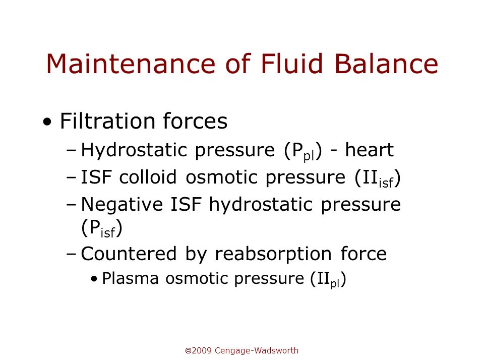  2009 Cengage-Wadsworth Maintenance of Fluid Balance Filtration forces –Hydrostatic pressure (P pl ) - heart –ISF colloid osmotic pressure (II isf )