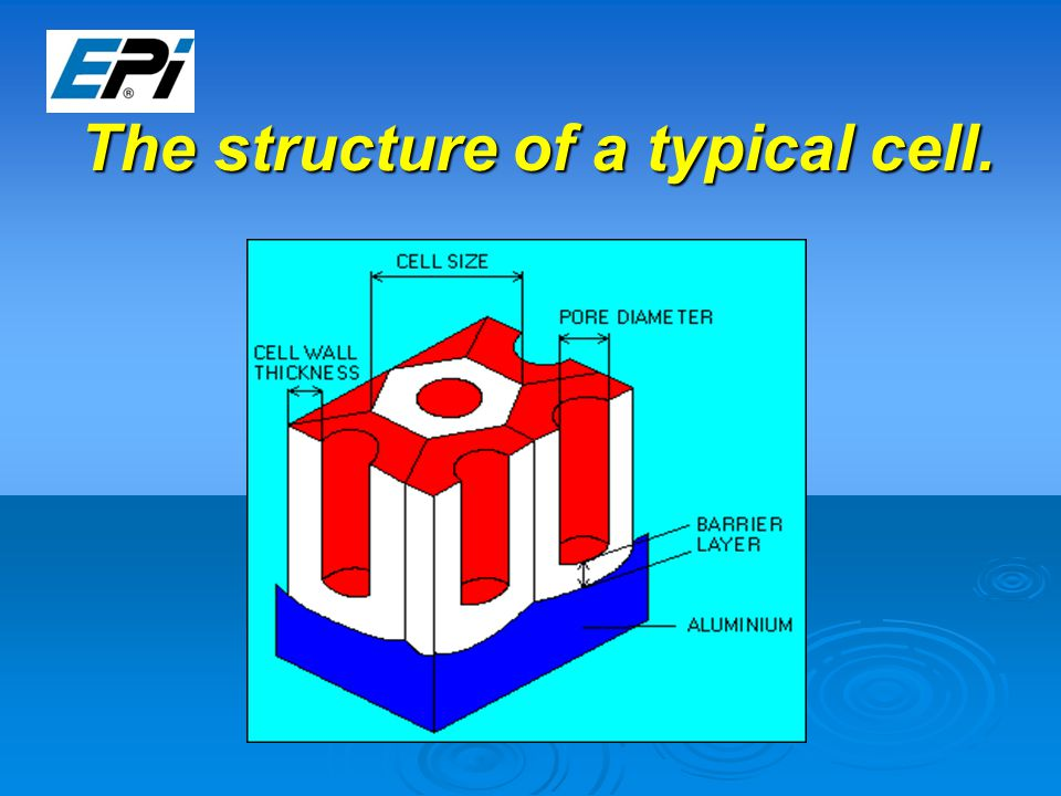 The structure of a typical cell.