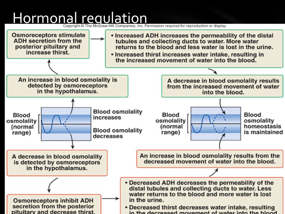 Hormonal regulation