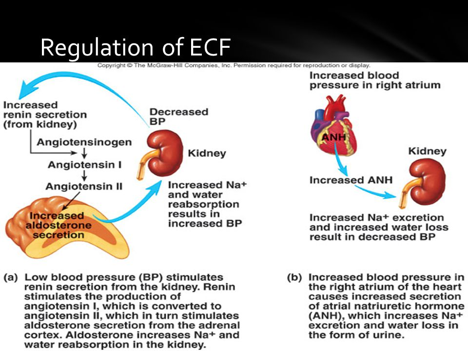Regulation of ECF